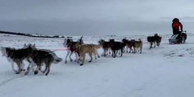 La Iditarod resiste