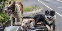 El Gobierno obligará a castrar a todos los perros de uno de los sexos cuando convivan machos y hembras