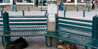 Quito: el reino  de taifas de perros callejeros