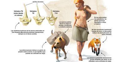 Hace 6.000 años los humanos  ya enterraban a los perros junto a ellos