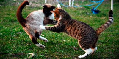 Del amor al odio hay un gato