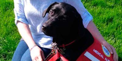 Jenn enseñó a su perro a mantener el cortisol a raya