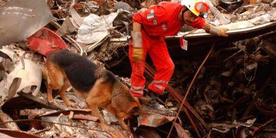 Los ataques del 11-S aumentaron la capacidad de entrenamiento de los perros
