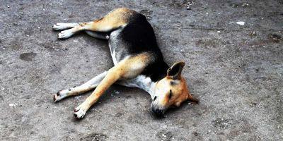 Qué hacer ante un perro vagabundo