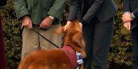 Militares con estrés tendrán perros de ayuda emocional