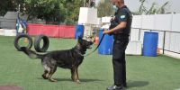 Los insobornables perros de la Unidad Canina de Málaga
