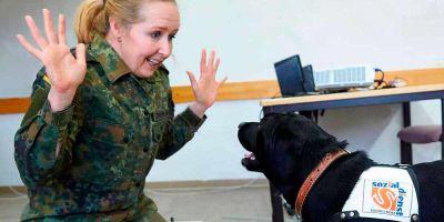 El ejército alemán demuestra  los potentes efectos de las intervenciones  asistidas con animales