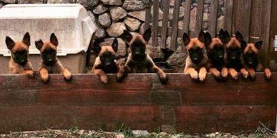 El Estado abre un concurso para comprar medio centenar de perros policía