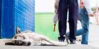 Juristas piden que se cree la figura del mediador animal