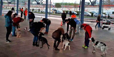 City Dog: Ni una mascota maleducada en nuestras calles