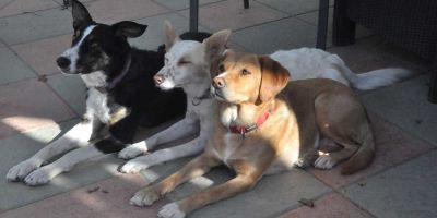 Los chavales cambian su actitud  con los perros de terapia