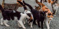 Una noche en busca de la colonia felina