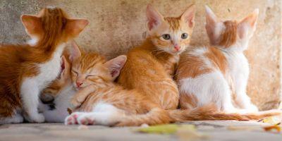 ¿Estás pensando en adoptar un gato?