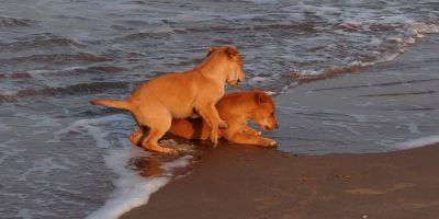 La calidad del esperma canino  se desploma un 30%