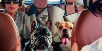 Un taxi para mi mascota