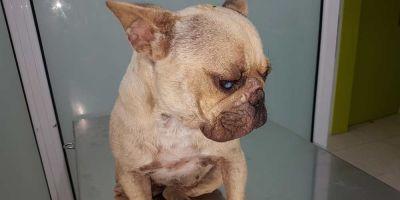 El gran riesgo de propagación de la leishmania: los perros sin tratar