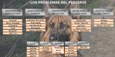 ¿Pedigree contra salud animal?