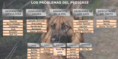 ¿Pedigree contra salud animal?