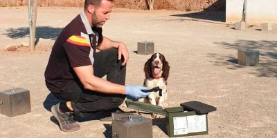 El mayor puerto de carga de África,Tanger Med, contrata a una empresa canina española