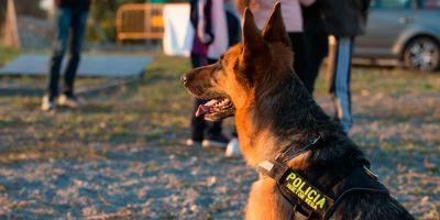 El perro es el agente ideal si un policía patrulla solo