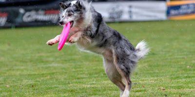 Disc dog, un popurrí de reglamentos