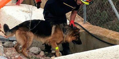 PREEI, grupo canino que combina rescate y educación a la infancia
