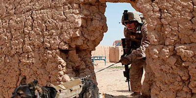 Cuatro perros contra el expolio en Siria  e Irak
