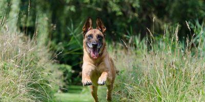 Estimular al perro