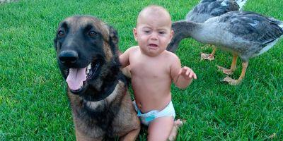 Los lametones de un perro previenen la esquizofrenia. Los de un gato, no