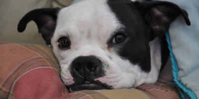 Curiosidades caninas descubiertas en la Universidad