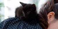 Estas son las enfermedades más comunes en gatos