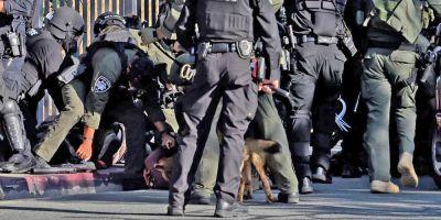 Cada cinco días un perro K9 manda al hospital a un sospechoso