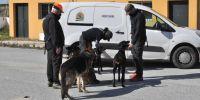 """Perros de rescate en Motril: """"hay que saber dónde está el límite"""""""