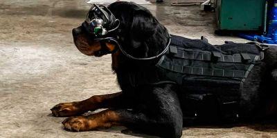 Los perros militares recibirán las órdenes a través de gafas