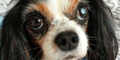 Primer país que aparca de raíz la venta ilegal de perros y gatos: Inglaterra