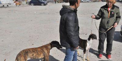 Cañada Real, ni un perro sin control