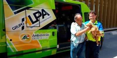 La ambulancia que recoge a perros en accidentes podría desaparecer