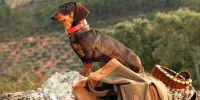¿Necesitan los perros de caza una categoría especial en la nueva ley animal?