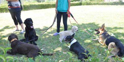 Mediador animal: nuevo campo profesional