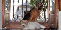 Cómo preparar la desescalada de los perros