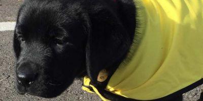Urbi, de la familia a perro guía