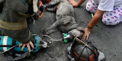 Los bomberos de EE UU incorporan  máscaras de óxigeno para mascotas