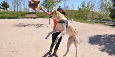 Los animales no entienden de territorios, sí de bienestar