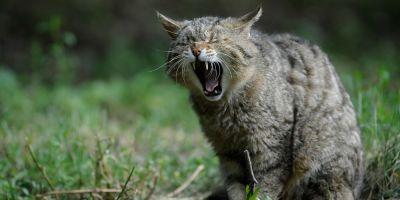 El lado oscuro de tu lindo gatito
