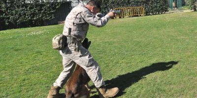 Los perros de élite del Ejército español toman sus propias decisiones