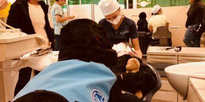 Dos perros de Chile, los mejores pacientes del dentista