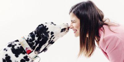 Apego humano-perro, un refugio seguro para los dos