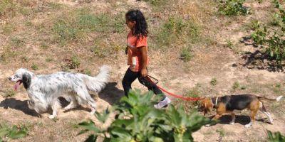 El paseo es tu unión con el perro