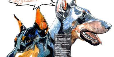 Laboratorios: caldo de experimentación con perros