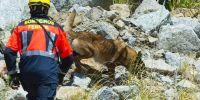 Los perros de rescate aprenden en Ferrol